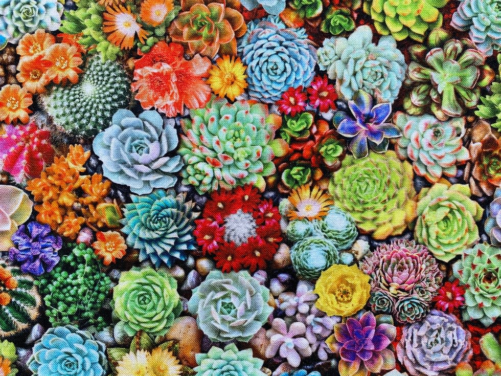 Cacti Fabric | Fabric pattern with a variety of colourful succulents
