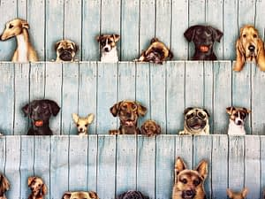Turquoise painted wood background fabric with various dog breeds pattern